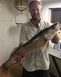 scott_merwin-30-inch walleye