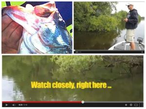 Scare-video-collage-blog
