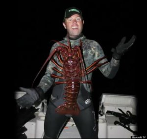 Giant_Lobster
