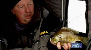 Glorvigen-bluegill-on-ice-2